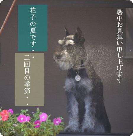 HanakonoNatydeL